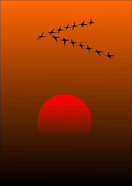 https://pixabay.com/vectors/migratory-birds-birds-sunset-sun-157638/